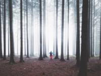 wanderer wald oberwiesenthal